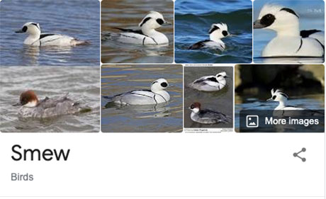 funny bird species names 32 Species of Birds Named By People Who Clearly Hate Birds is a Thing and Its Incredible