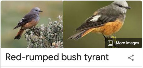 funny bird species names 34 Species of Birds Named By People Who Clearly Hate Birds is a Thing and Its Incredible