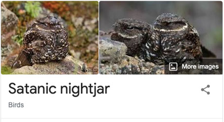 funny bird species names 35 Species of Birds Named By People Who Clearly Hate Birds is a Thing and Its Incredible