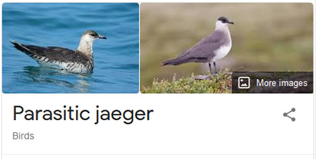 funny bird species names 36 Species of Birds Named By People Who Clearly Hate Birds is a Thing and Its Incredible