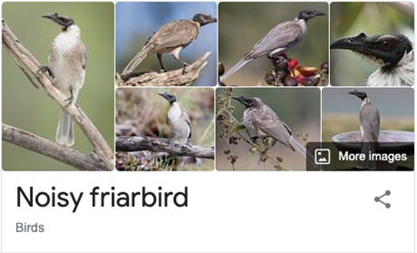 funny bird species names 42 Species of Birds Named By People Who Clearly Hate Birds is a Thing and Its Incredible