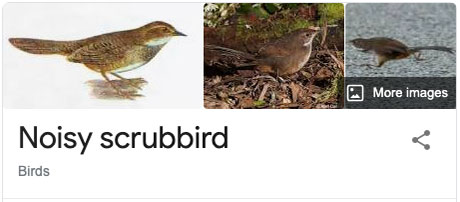 funny bird species names 43 Species of Birds Named By People Who Clearly Hate Birds is a Thing and Its Incredible