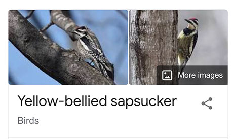 funny bird species names 8 Species of Birds Named By People Who Clearly Hate Birds is a Thing and Its Incredible