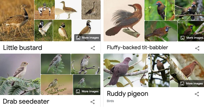 Species of Birds Named By People Who Clearly Hate Birds is a Thing and It's Incredible