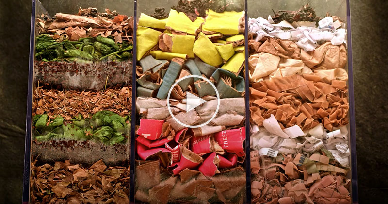 Worms Composting Leaves, Cardboard, and Paper in Fascinating 100 Day Time-Lapse