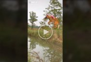 Dog Absolutely Sails Over This Stream