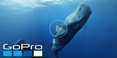 Click and Drag Around this 360 Video and Go VR Diving with Sperm Whales