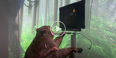 Neuralink Releases Jaw Dropping Demo of Macaque Playing Video Games with His Mind