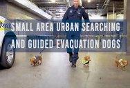 Aussie PD Scraps SWAT Team for S.A.U.S.A.G.E Team in April Fools Video