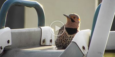 This Metal Slide Gave Me a Newfound Appreciation for a Woodpecker's Speed