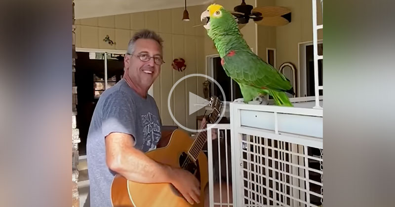 This Guy Riffing with His Parrot is the Best Thing Ever