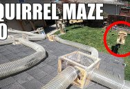 You Can't Help but Root for the Squirrels to Get Through this Amazing Backyard Obstacle Course