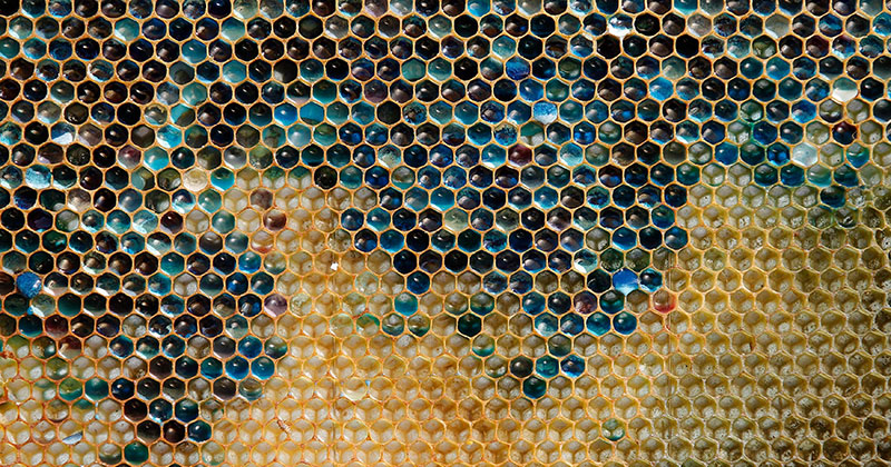 Blue Honey Mystery Solved as Bees Found Visiting Local M&M Factory