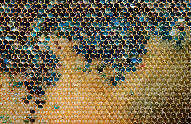 Blue Honey Mystery Solved as Bees Found Visiting Local MM Factory Blue Honey Mystery Solved as Bees Found Visiting Local M&M Factory