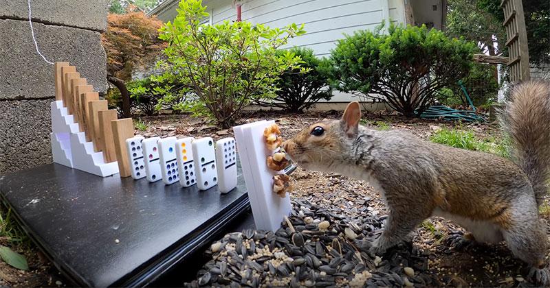Squirrel Sets Off Rube Goldberg Machine and Earns Tasty Treat