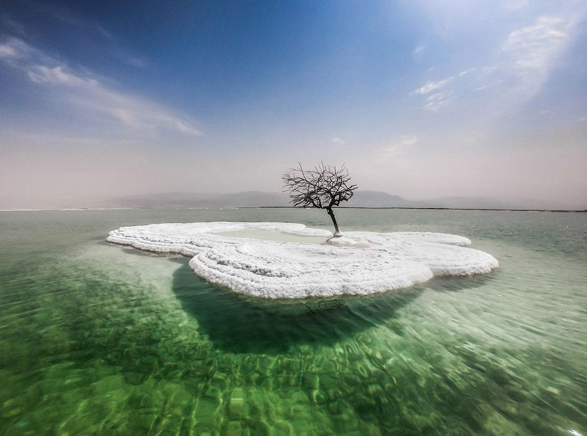 Dead Tree in Sea of Life 1 Dead Tree in Sea of Life