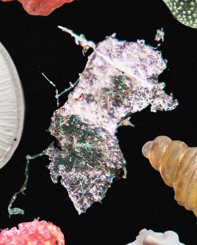 beach sand under microsope macrofying 3 Beach Sand Under a Microscope