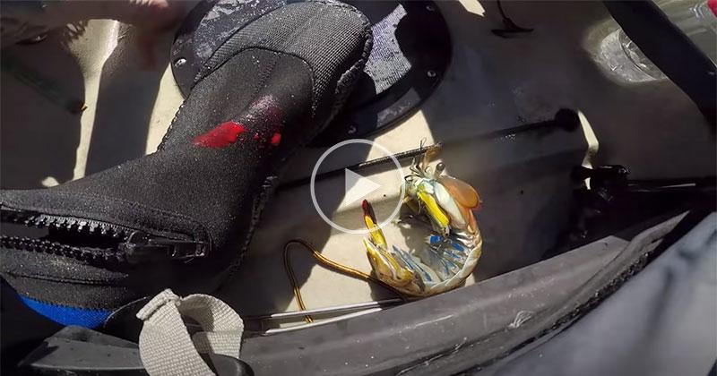 Guy Gets Punched By Mantis Shrimp