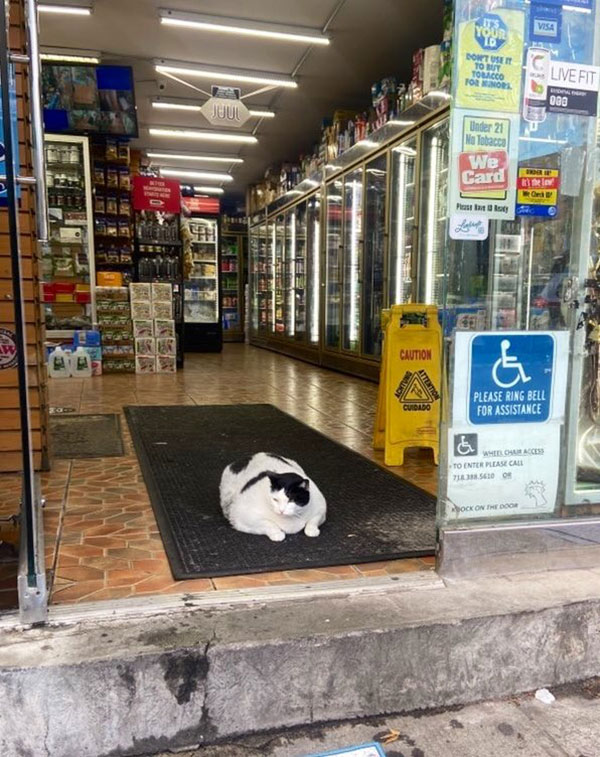 best of bodega cats twitter 13 This Twitter Account is Dedicated to Bodega Cats and Its the Best