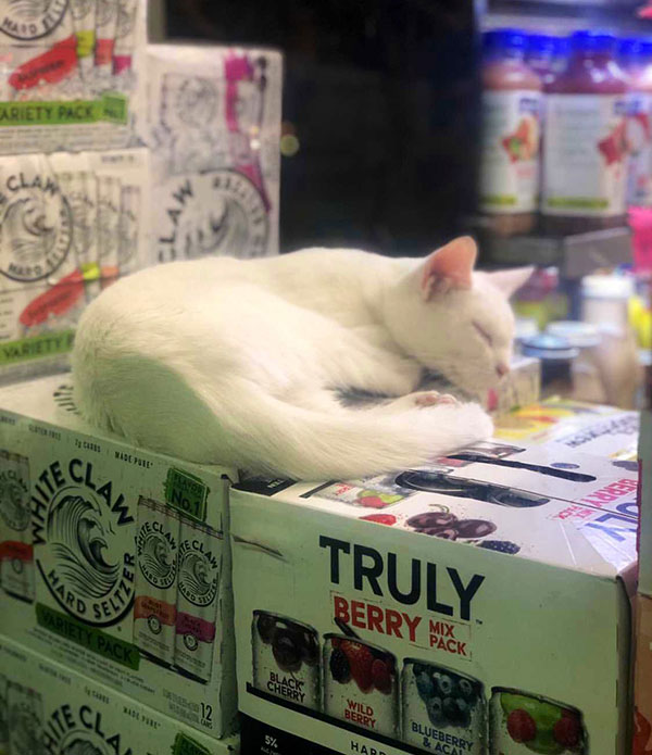 best of bodega cats twitter 14 This Twitter Account is Dedicated to Bodega Cats and Its the Best
