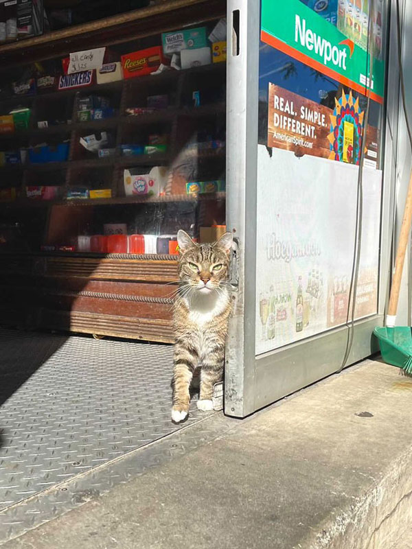 best of bodega cats twitter 15 This Twitter Account is Dedicated to Bodega Cats and Its the Best