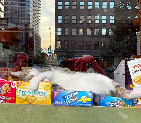 best of bodega cats twitter 5 This Twitter Account is Dedicated to Bodega Cats and Its the Best