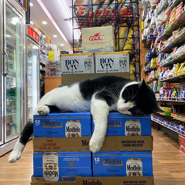 best of bodega cats twitter 6 This Twitter Account is Dedicated to Bodega Cats and Its the Best