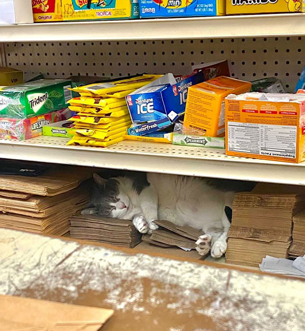 best of bodega cats twitter 7 This Twitter Account is Dedicated to Bodega Cats and Its the Best