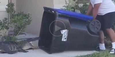 Guy Captures Alligator with Garbage Bin