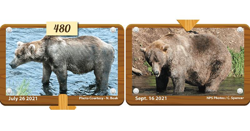 Congratulations to Otis, Your 2021 Fat Bear Week Champion