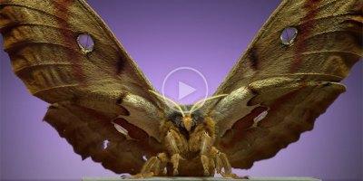 Moths Taking Flight at 6,000 FPS