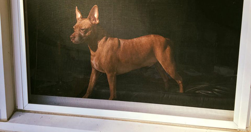 Accidental Renaissance: Photo of Dog Through Window Screen Looks Like Old Oil Painting